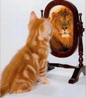 percaya diri tinggi