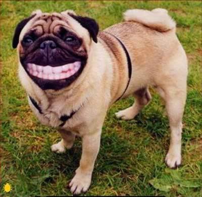 senyum yang tulus